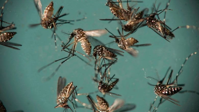 Positive West Nile virus mosquito samples rising in Montgomery County