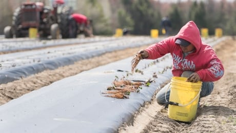 COVID Que Farms 20200506