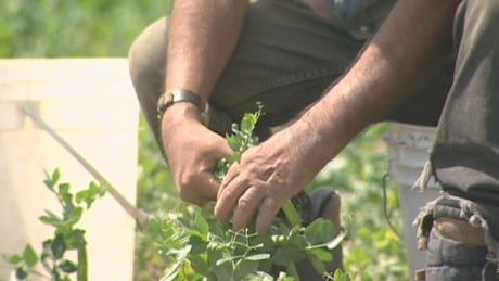 Ontario to ramp up farm inspections as migrant workers arrive for new season of work
