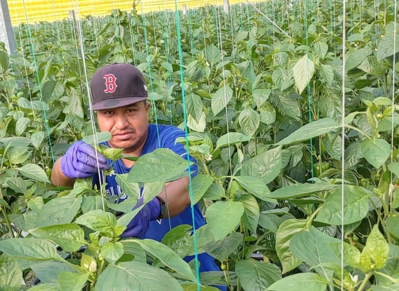 'He was a good and caring person,' says wife of migrant worker who died of COVID-19 on Ontario farm