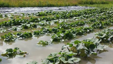 puddle-produce