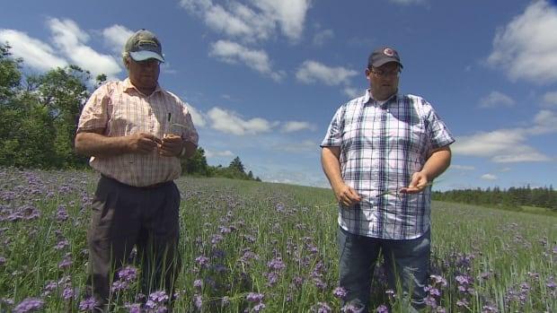 P.E.I. potato farmers plant flower-filled 'refuge fields' for pollinators