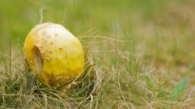 Mushroom misconceptions: There's fact, fiction, and great flavour to be found   CBC News