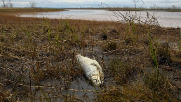 Indigenous groups paying the price for Russia's massive Arctic fuel spill