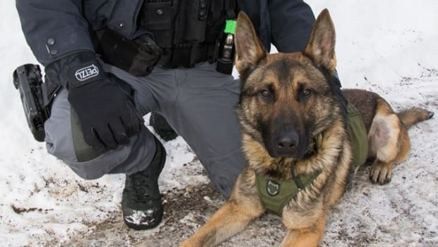 Thunder Bay police K9 unit dispatched to three rescues in ...