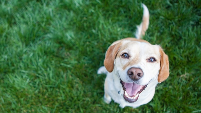 Study shows dogs aren't hardwired to focus on people's faces