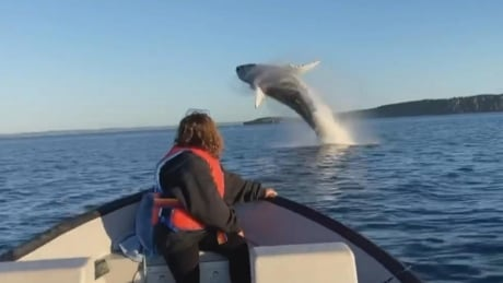 Sarah Russell watching whale breach