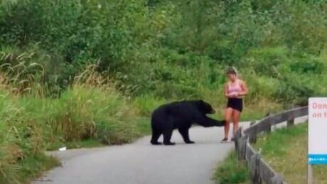 Coquitlam Crunch Black Bear encounter August 29, 2020