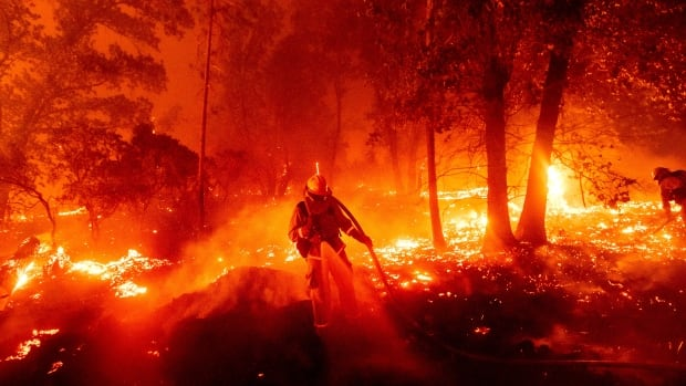Record-breaking California wildfires scorch 8,000 sq. km, prompting closure of state forests | CBC News