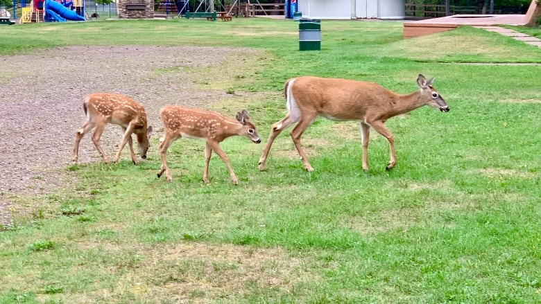 truro-deer-cull.jpg