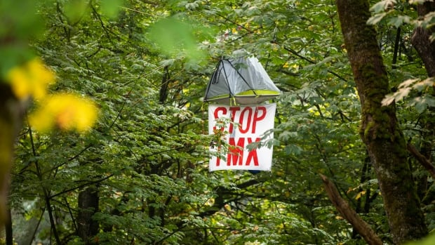Burnaby tree-sitters claim victory in protest against Trans Mountain p... image