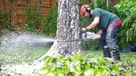 Tree cutting down