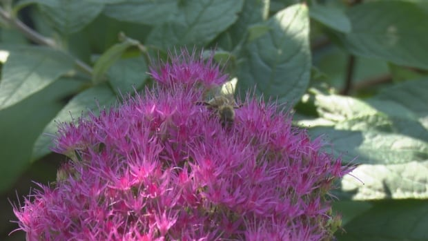 Chat with our gardeners on Monday, Sept. 28 at 12:30 p.m. | CBC News