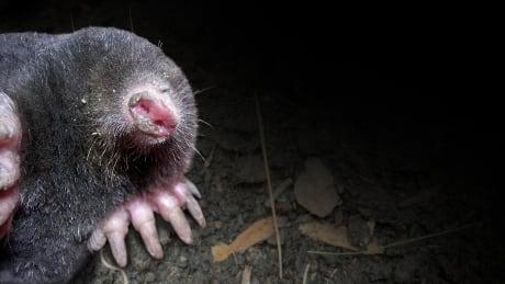 Mole selfie