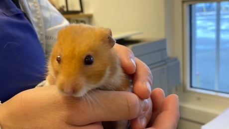 Andy the hamster