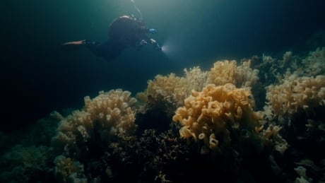 glass sponge reef