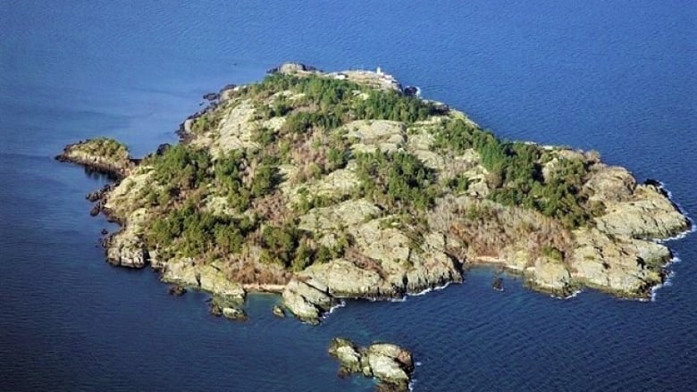 B C Conservationists Scramble To Raise 1 7m To Buy Island Cbc News