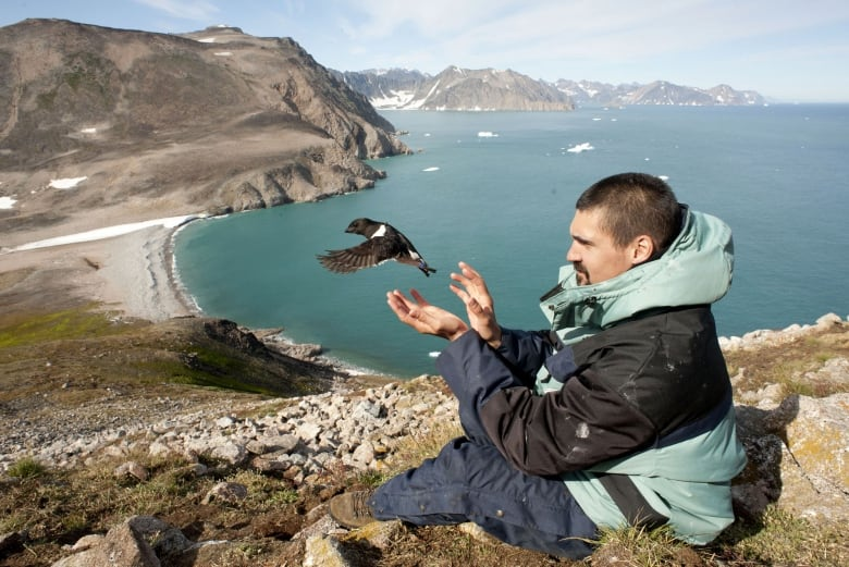 Tracking the effects of climate change on Arctic animals is no easy task thumbnail