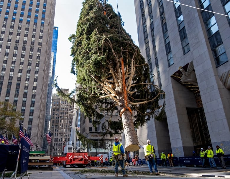 Rocky the Christmas tree stowaway owl returns to the wild | CBC News
