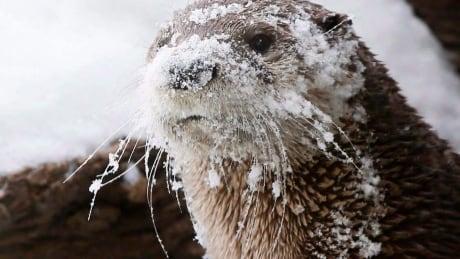 Otter Dog Fight 20180216