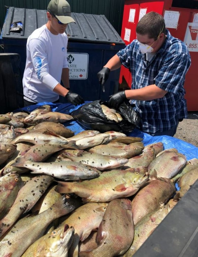 Fishing tournament organizer fined after Almost 200 fish Seen in dumpster thumbnail