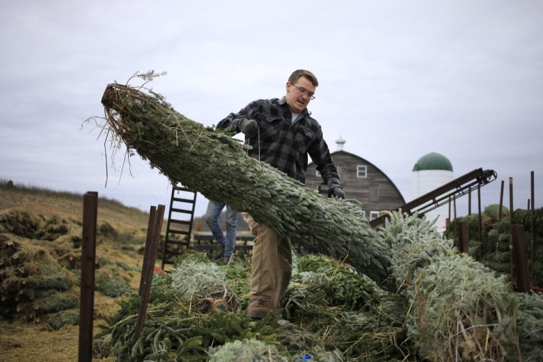 'Everyone wants a tree' — feverish demand for Christmas trees prompts high prices, shortages