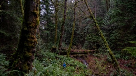 Vancouver Island old growth