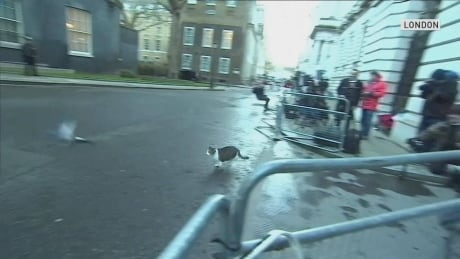 Pigeon's brazen escape from cat at 10 Downing Street