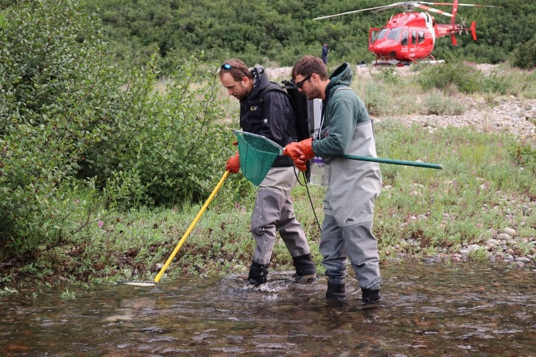 Labrador's Arctic char vulnerable to climate change, says new study