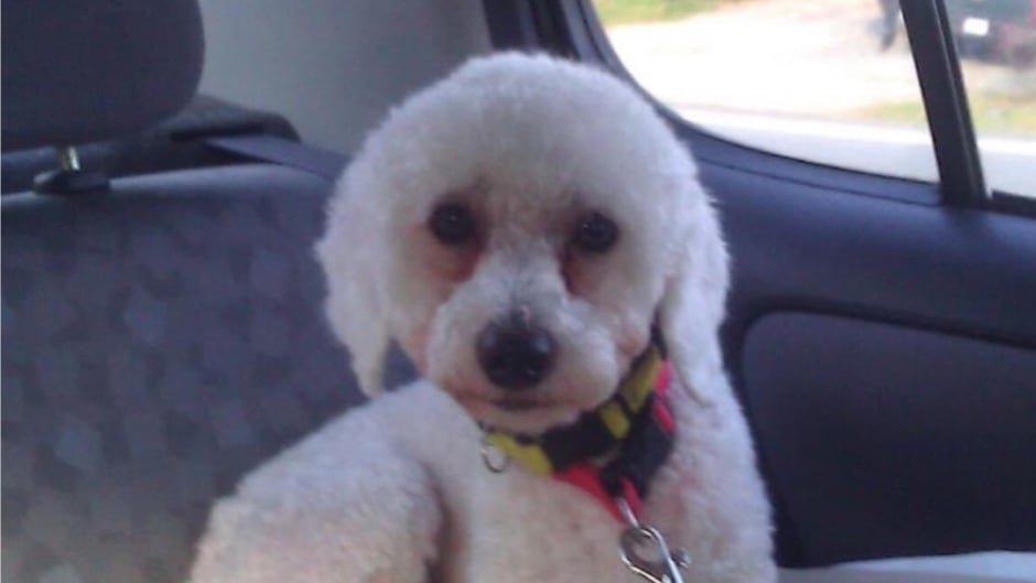 cbc.ca - Blair Rhodes - Dartmouth real estate agent fined, suspended for taking dog