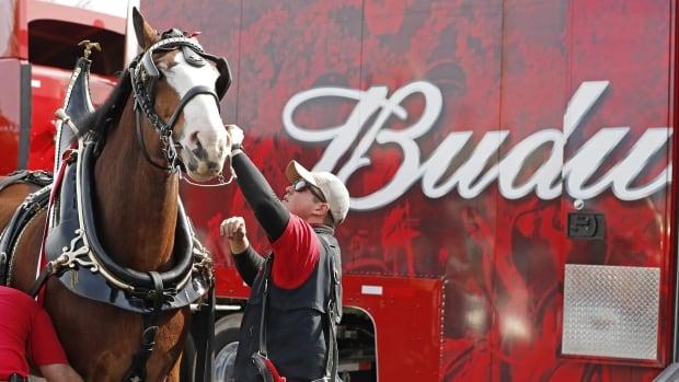 Big advertisers balk at big Super Bowl spending amid COVID-19 gloom | CBC News