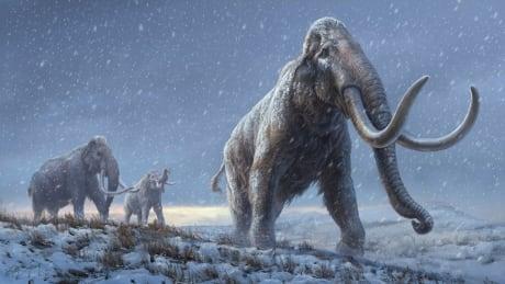 The extinct steppe mammoth