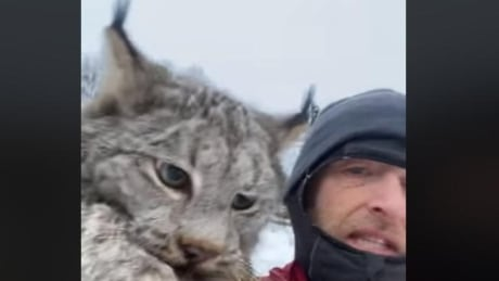 B.C. farmer grabs lynx by scruff of neck, scolds it for killing chickens
