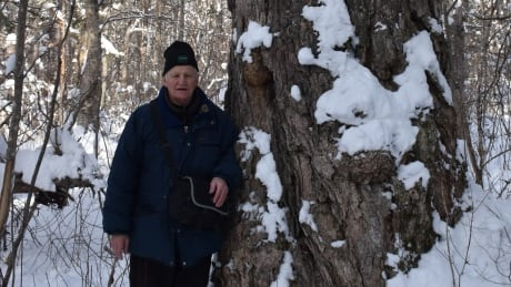 Rod O'Connell and the big yellow birch