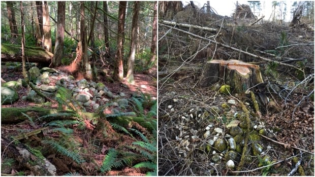 Shíshálh Nation demands action after burial site reportedly desecrated by logging