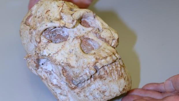Little Foot fossil scan sheds light on human origins