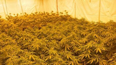 RCMP Cannabis