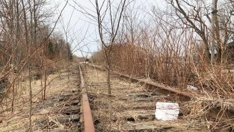 Cape Breton rail trees 2021