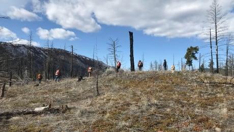 Skeetchestn Natural Resources team surveying Back Valley
