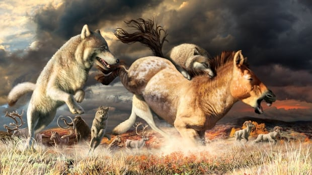 Wolf teeth shed light on survival of species over thousands of years