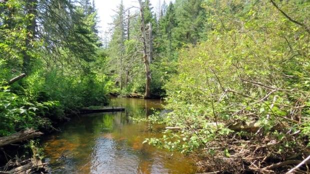 Songbird, salmon breeding habitat protected by Island Nature Trust acquisition