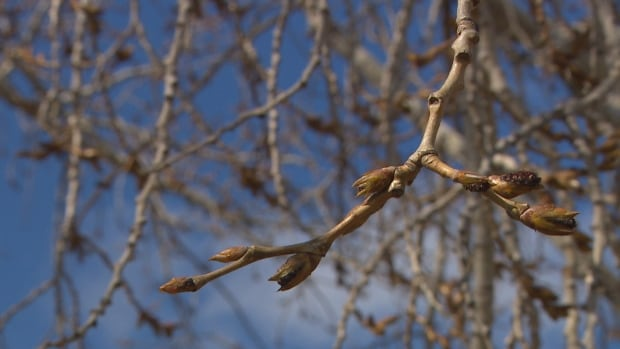 A fool's spring? Alberta is in it, says senior climatologist | CBC News