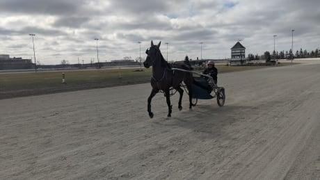 Harness racing Charlottetown April 2021