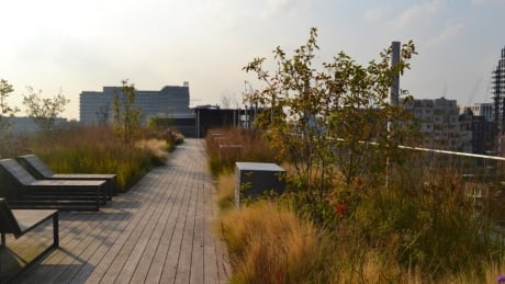 Blue-green roof