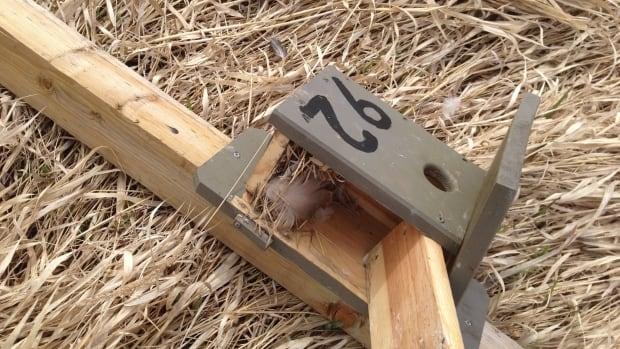 Concerns mount after vandals destroy 8 bird boxes in Shuswap region during nesting season | CBC News