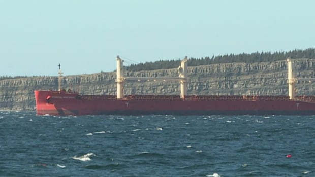 Seafarers' union 'fighting hard' for vaccinations as quarantined cargo ship stays anchored off N.L.