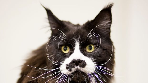Why cats may have more to teach us about living the good life than Socrates   CBC Radio