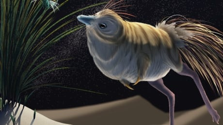 Bird-like dinosaur could hunt in total darkness, pointing to thriving prehistoric nightlife
