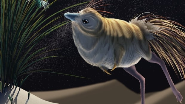 Bird-like dinosaur could hunt in total darkness, pointing to thriving prehistoric 'nightlife'