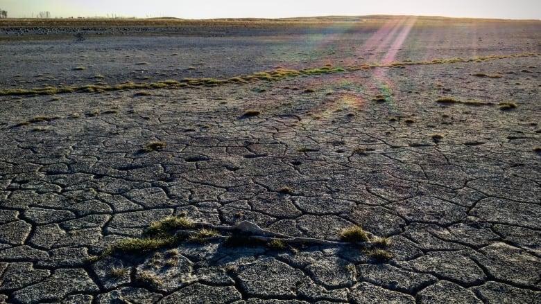 https://i.cbc.ca/1.6018981.1620429833!/fileImage/httpImage/image.jpg_gen/derivatives/16x9_780/drought-near-estevan.jpg